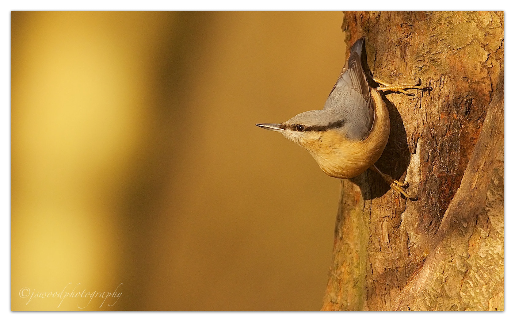 Photograph Nuthatch by Jason Wood on 500px