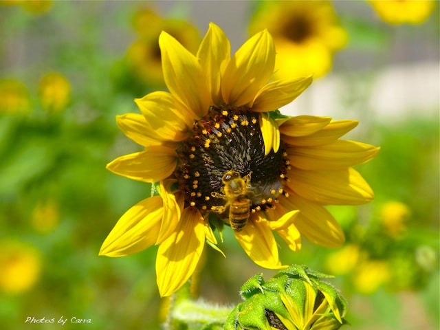 Photograph The bee by Carra Riley on 500px