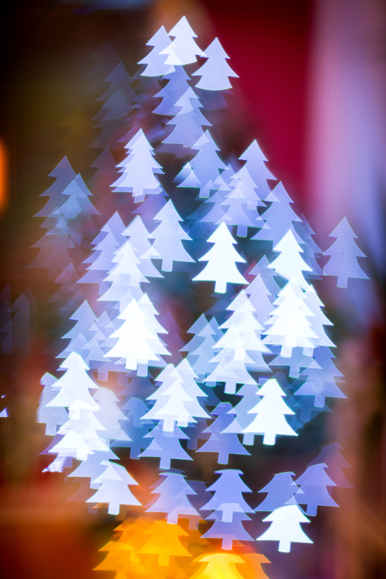 Photograph My Christmas trees by Richie Hatch on 500px