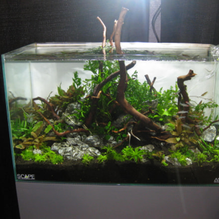 Planted Tank 1, Canon POWERSHOT SD790 IS