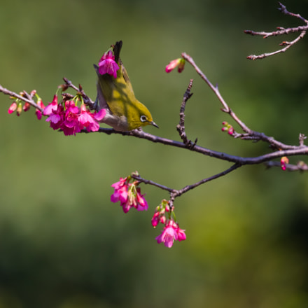 spring time, Canon EOS-1D X, Canon EF 800mm f/5.6L IS