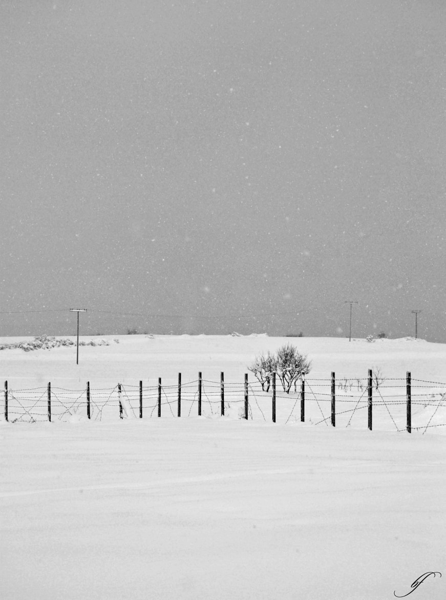 Photograph Grey Winter by Burim Fejsko on 500px