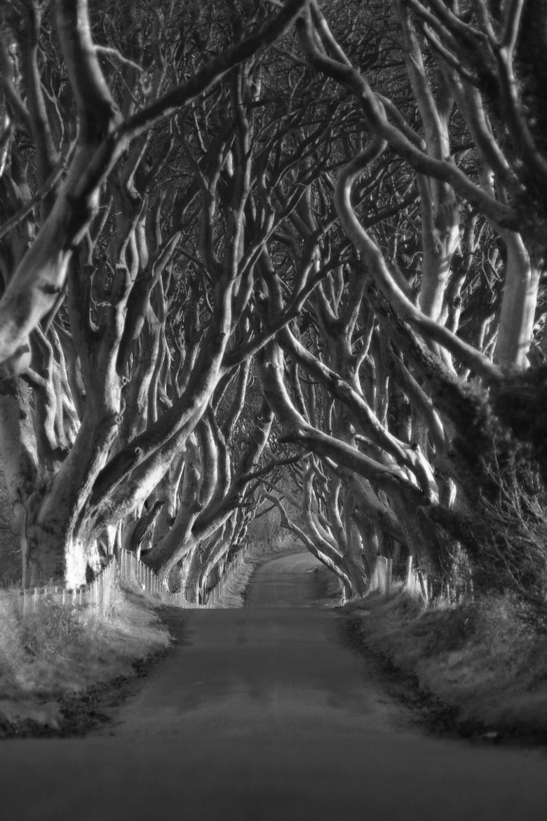 Photograph Irish country road by G Mclaughlin on 500px