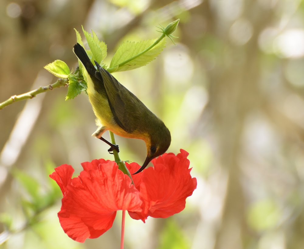 Photograph bird and flower 2 by thiet_vannguyen on 500px