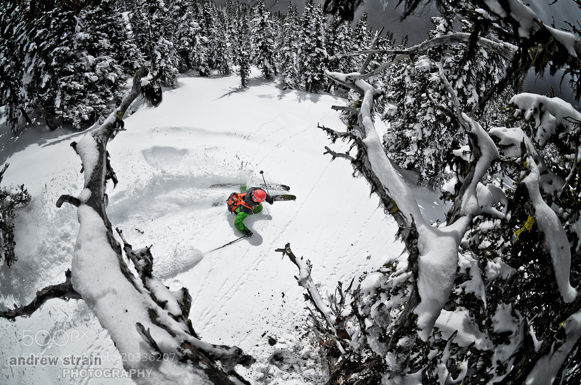 Photograph Tree Ski by Andrew Strain on 500px