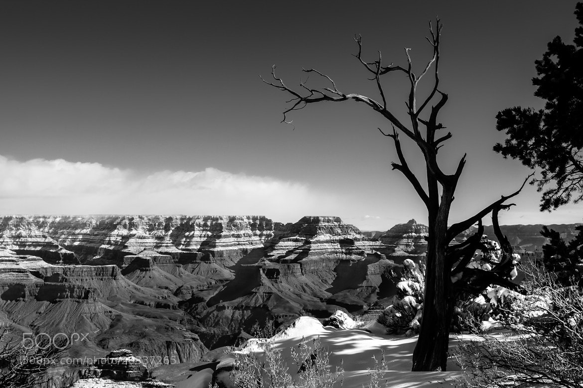 Photograph Mather Point by Stephen Lewis on 500px