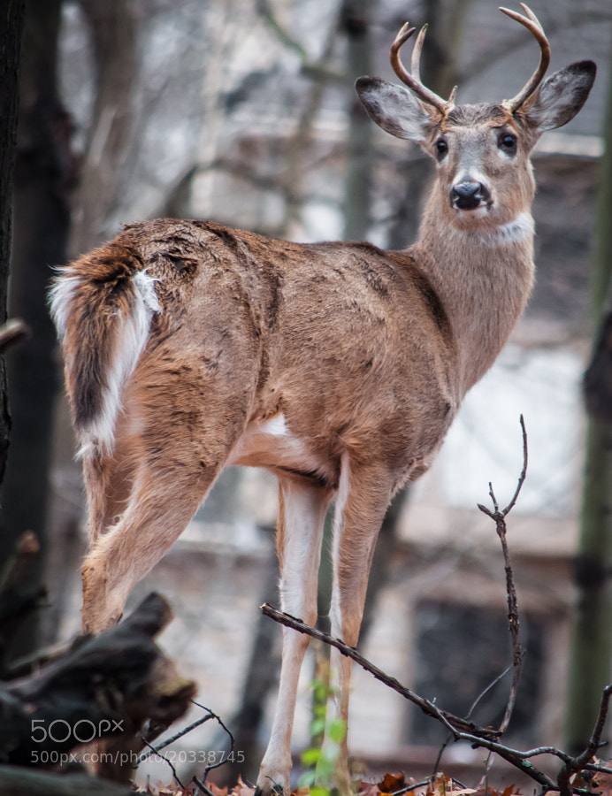 "He's called ""the ugly buck"" in these woods, mainly because of the gothic make-up looking eyes. But, as we all know with adolescence, awkwardness can change and he'll likely have the rugged, majestic good looks of a full-grown buck."