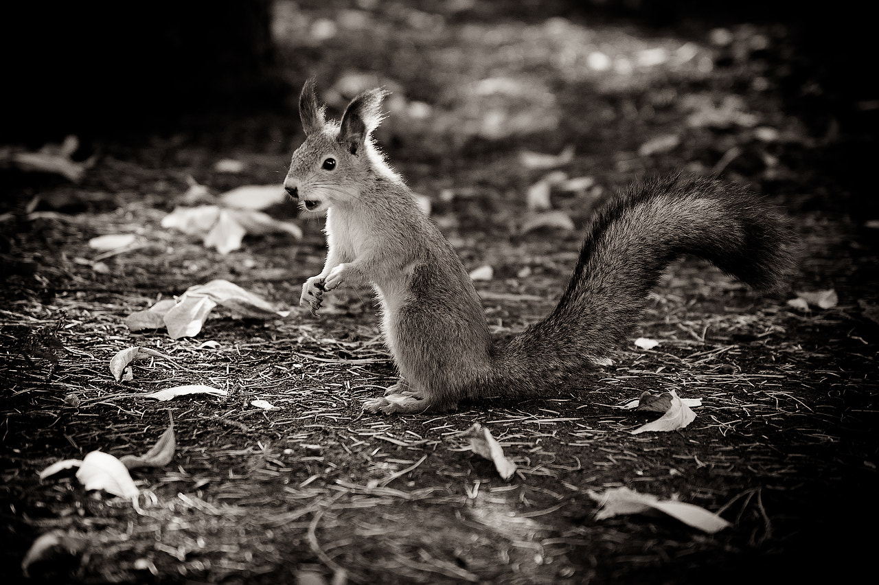 Photograph Where is my nuts? by Konstantin Shibkov on 500px