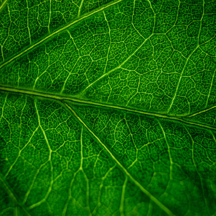 plant leaf, Canon EOS 6D, Canon EF 28mm f/2.8 IS USM