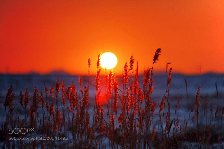 Photograph Sunrise by RealbluE Ahn on 500px