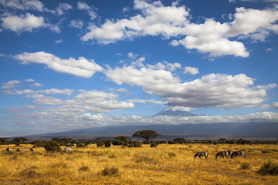 Photograph Kilimanjaro by Sdolo Res on 500px