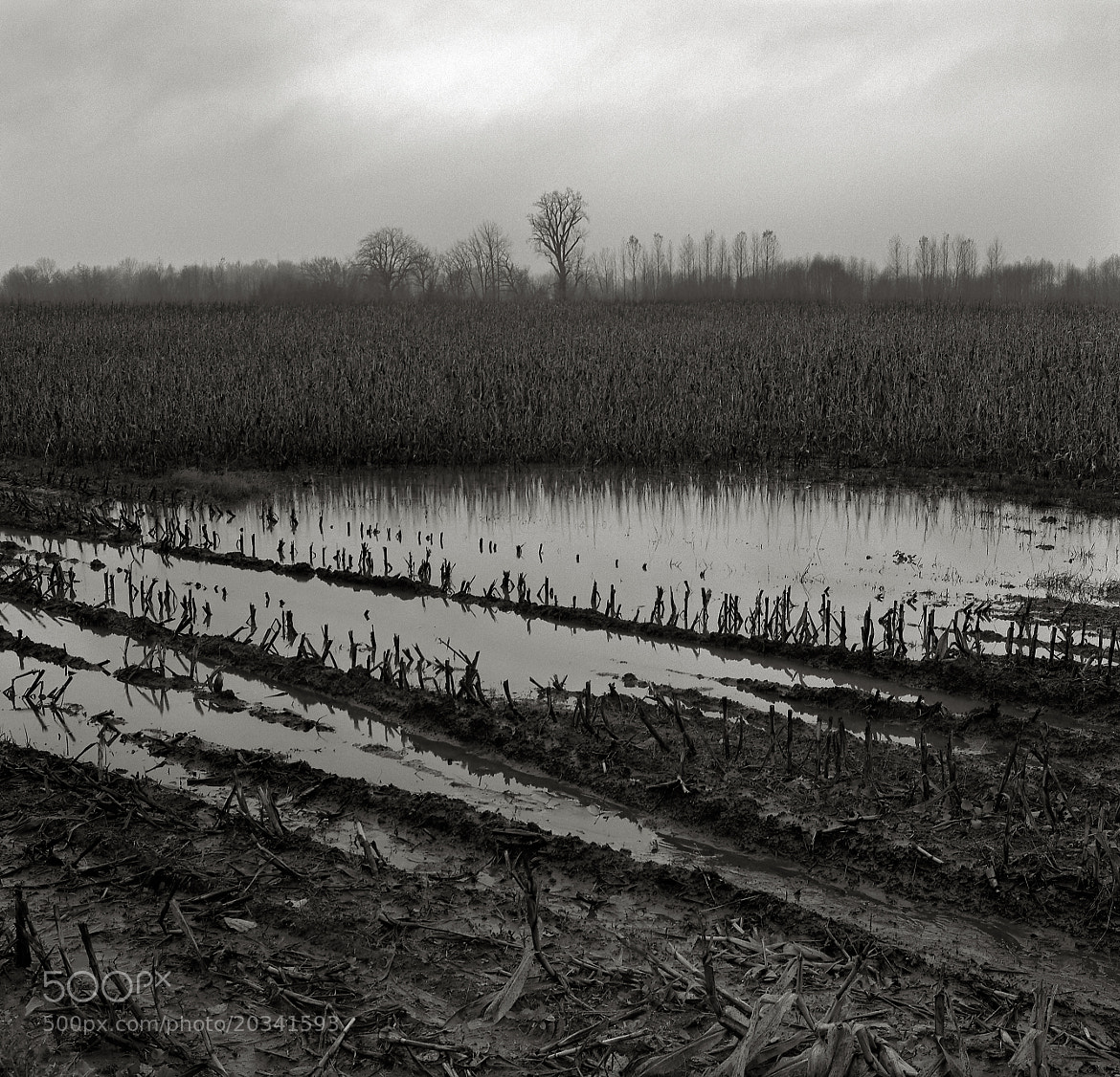Photograph Flooded Field with Cottonwood, Oregon by Austin Granger on 500px