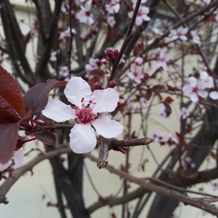 Almond Tree, Samsung GT-I8750