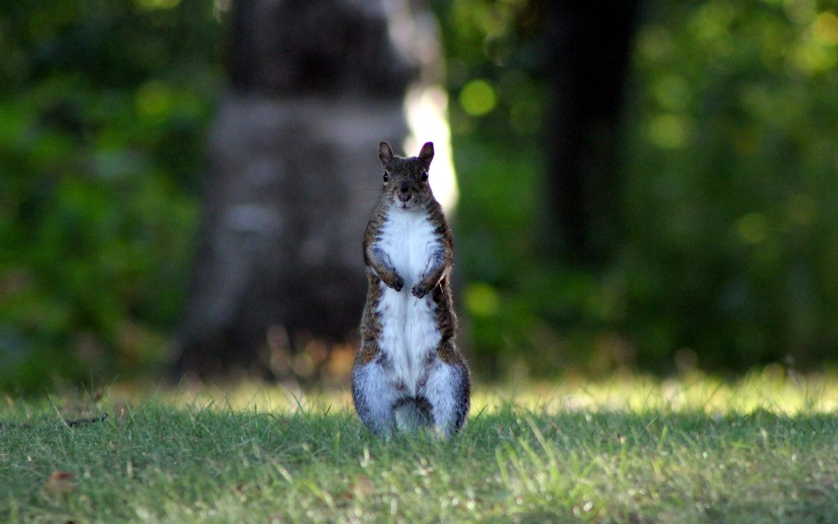 Photograph Are you loooking for my nuts? by Shane Lawrence on 500px