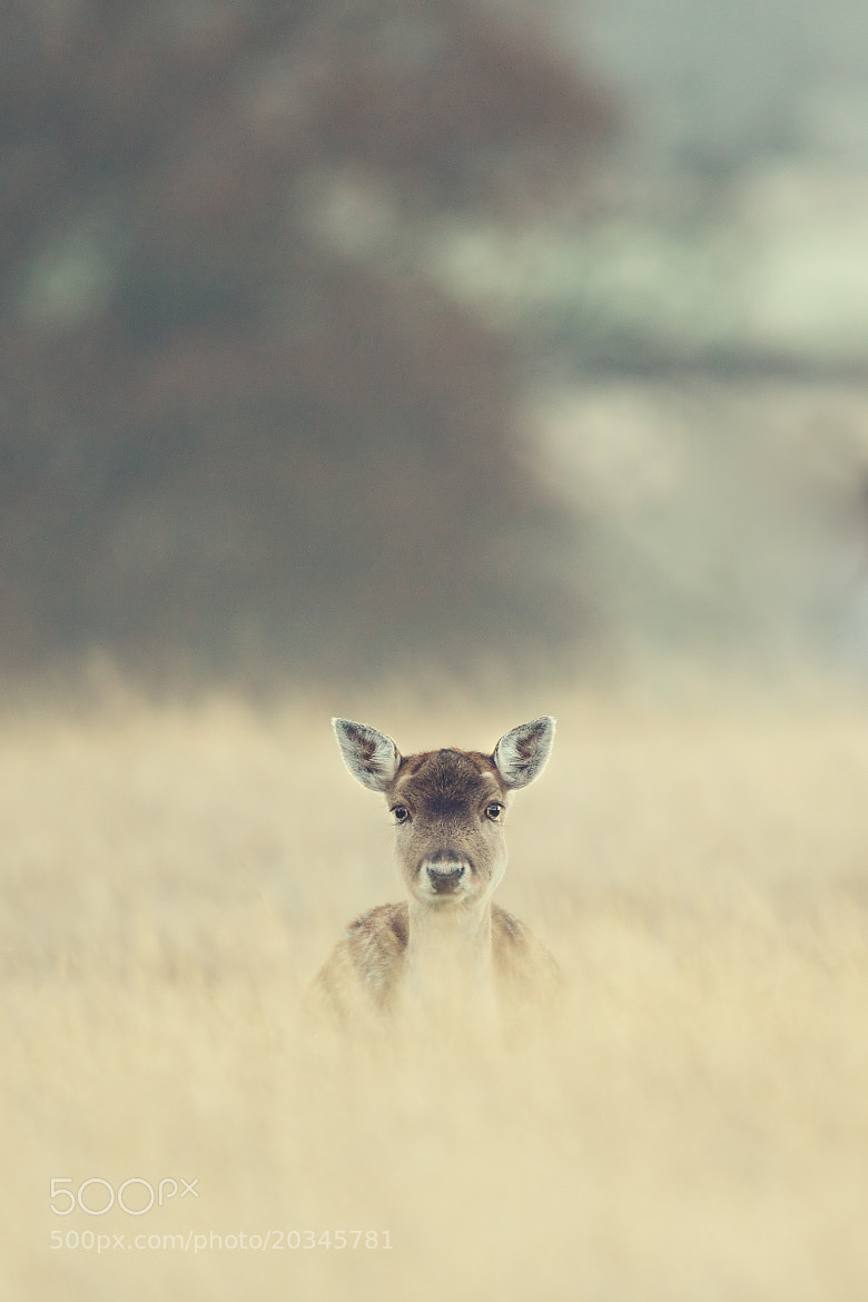 Photograph minimalistic by Mark Bridger on 500px