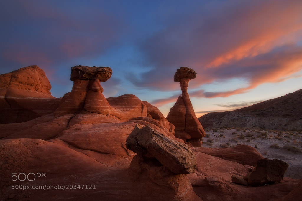 Photograph Toadstools Evening Glow by David Thompson on 500px