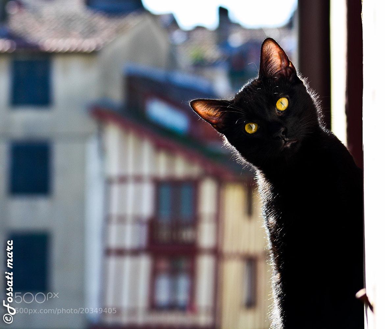 "Photograph Cat ""Kilou"" by Marc Fossati Fotographie on 500px"