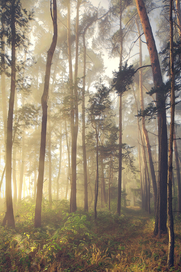 Photograph Enchanted Forest by Kilian Schönberger on 500px