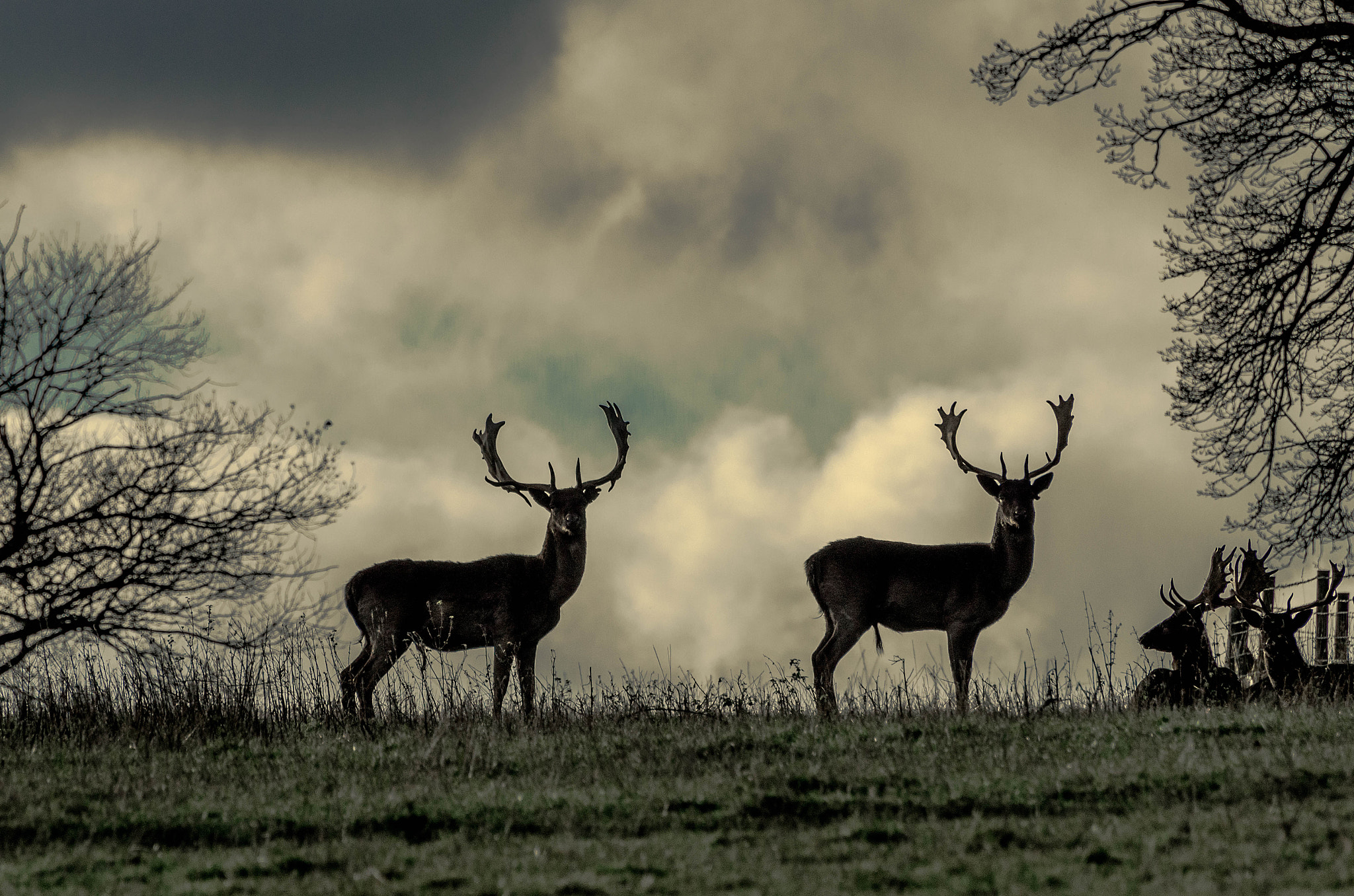Photograph Near-Forest Life by Pawel Niktos on 500px