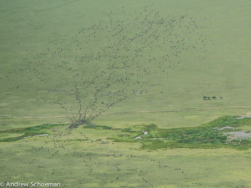 Photograph Migration Madness by Andrew Schoeman on 500px
