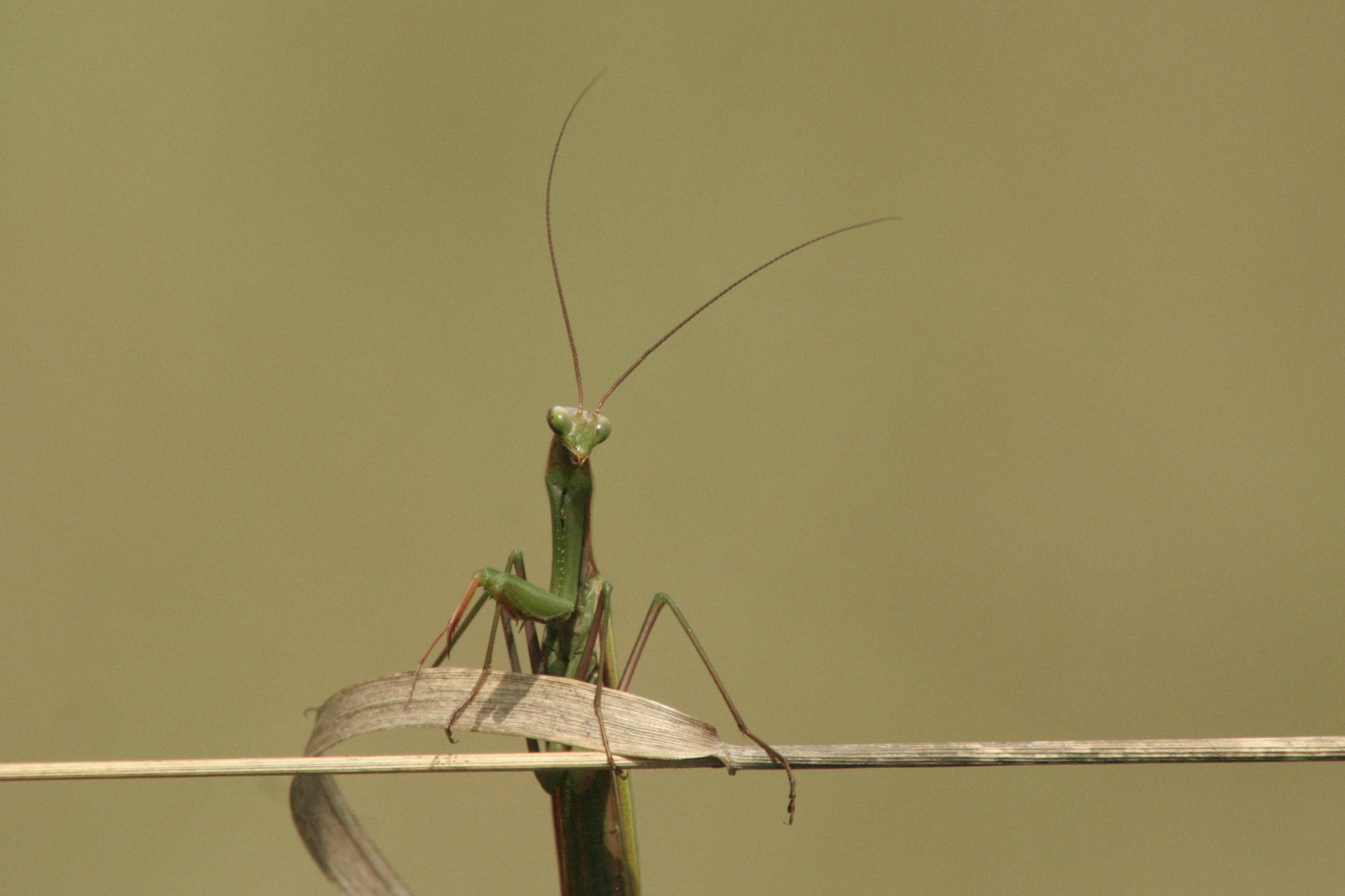 Photograph Posing Mantis by Gary Crawford on 500px