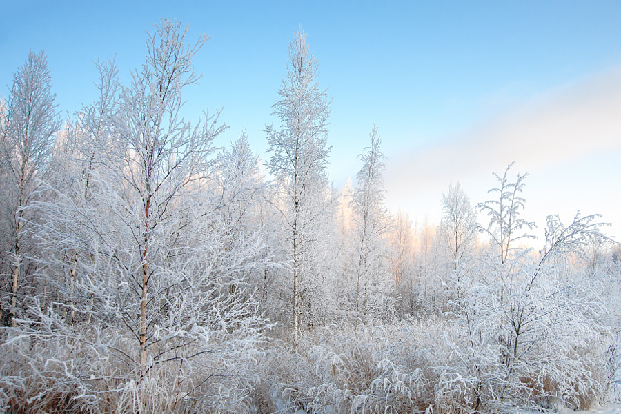 Frozen December by Ari Salmela on 500px.com