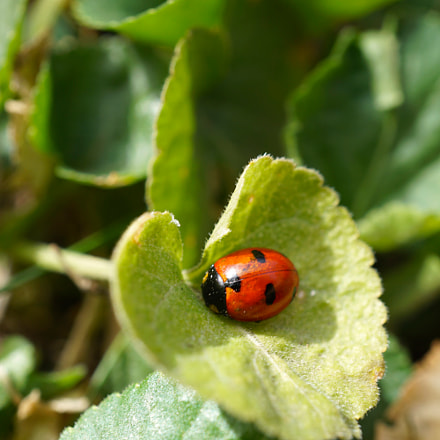 The First Ladybird Of, Sony ILCE-6000, Sony E 30mm F3.5