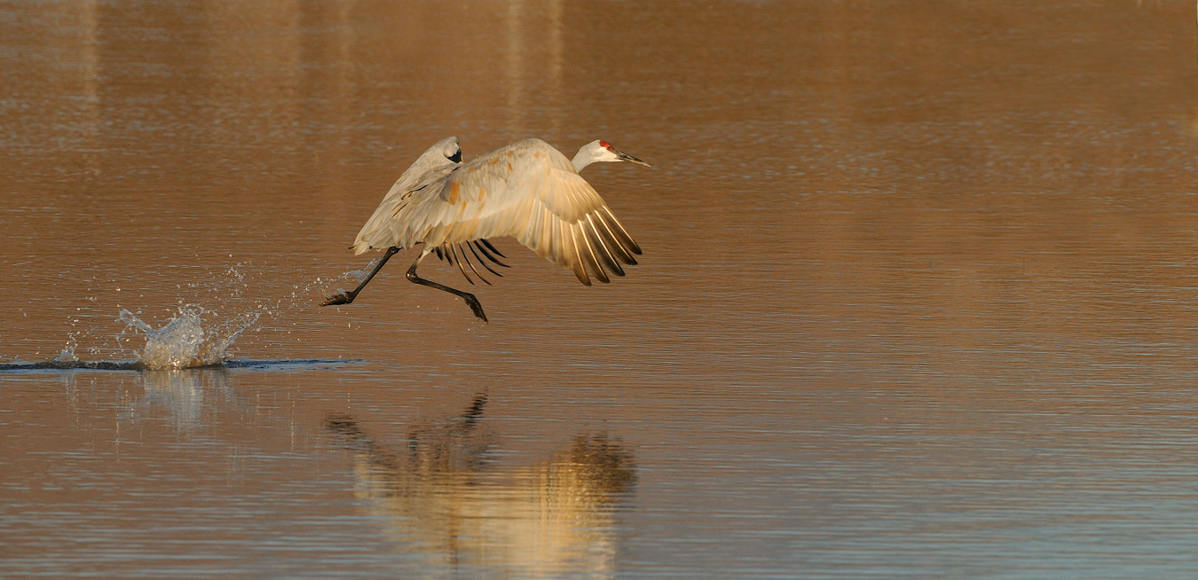 Photograph Takeoff by Harry  Eggens on 500px