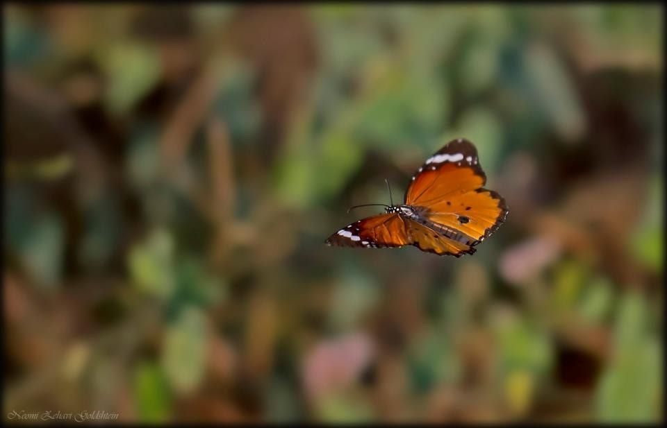 Photograph Butterfly by gneomi on 500px