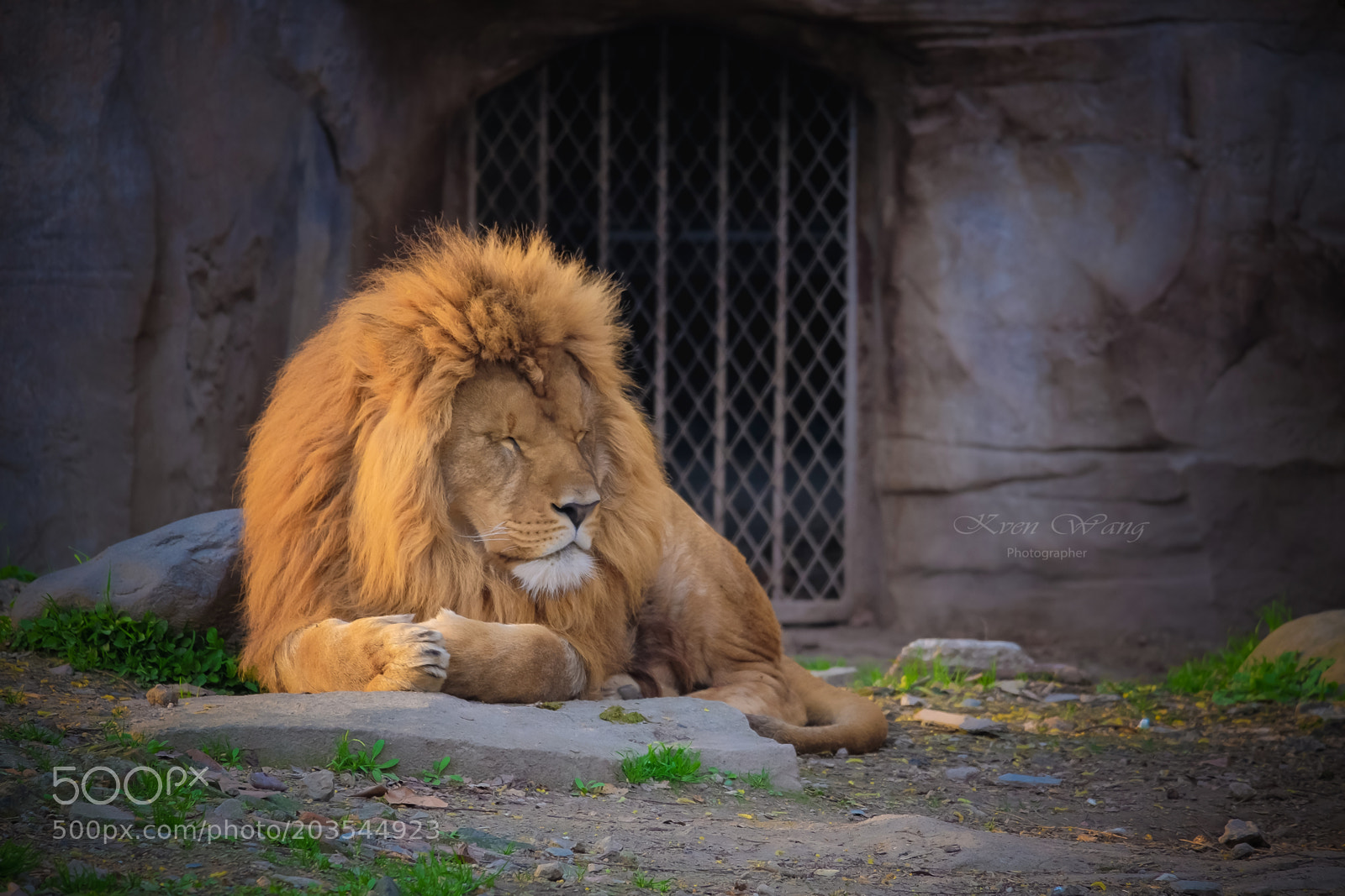 King of beasts, Fujifilm X-T10, XC50-230mmF4.5-6.7 OIS II
