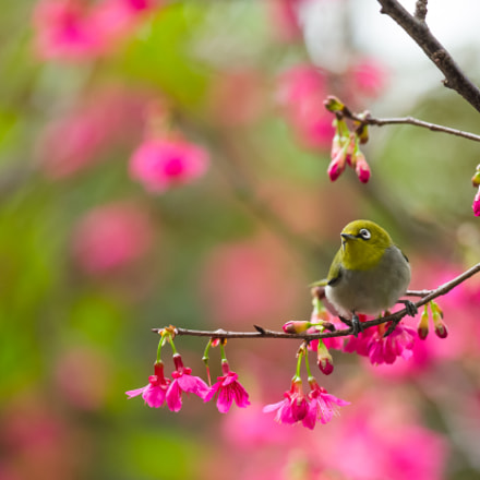 spring is my favorite, Canon EOS-1D X, Canon EF 300mm f/2.8L IS II USM
