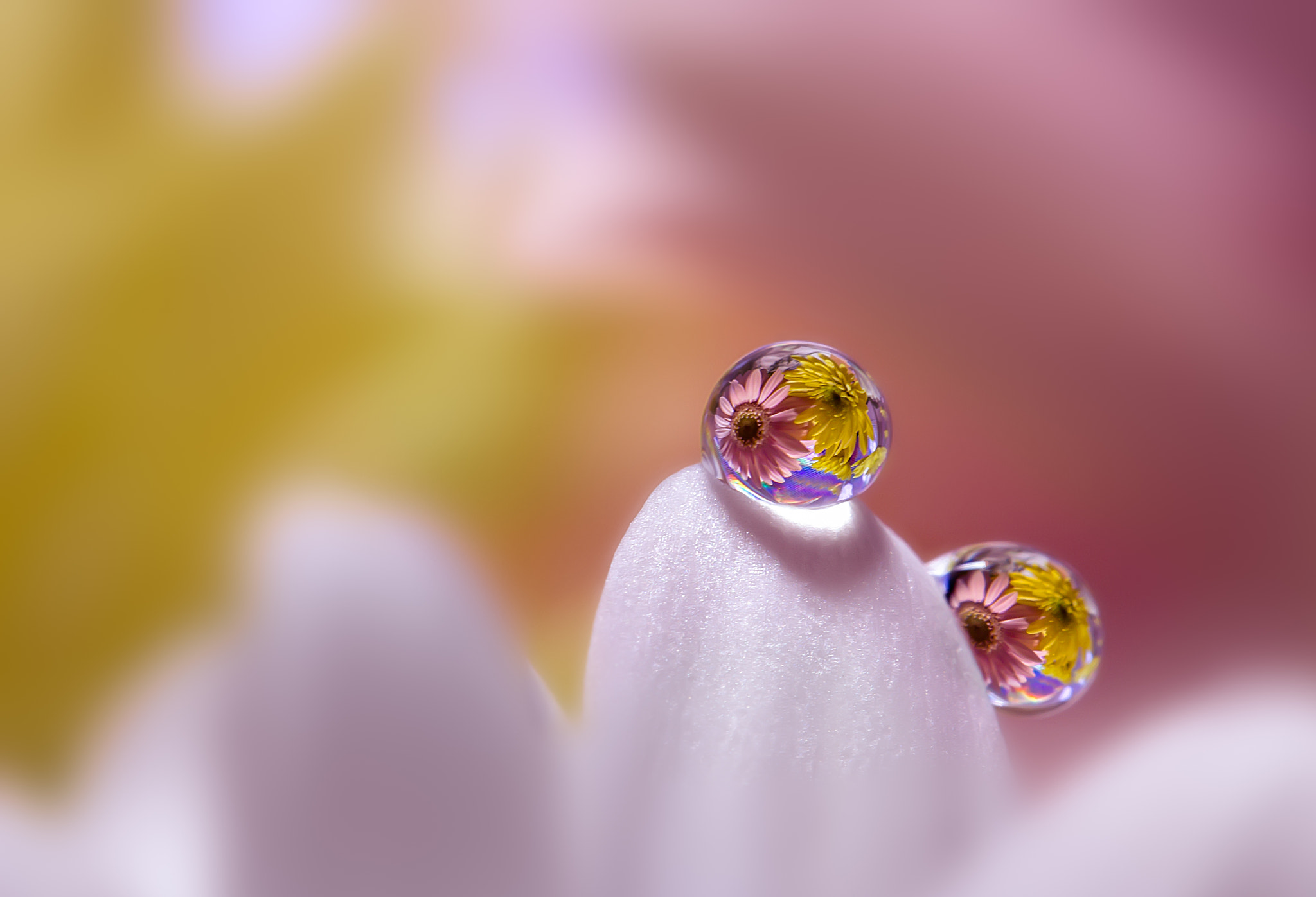 Photograph PK & YL on the WT by Miki Asai on 500px
