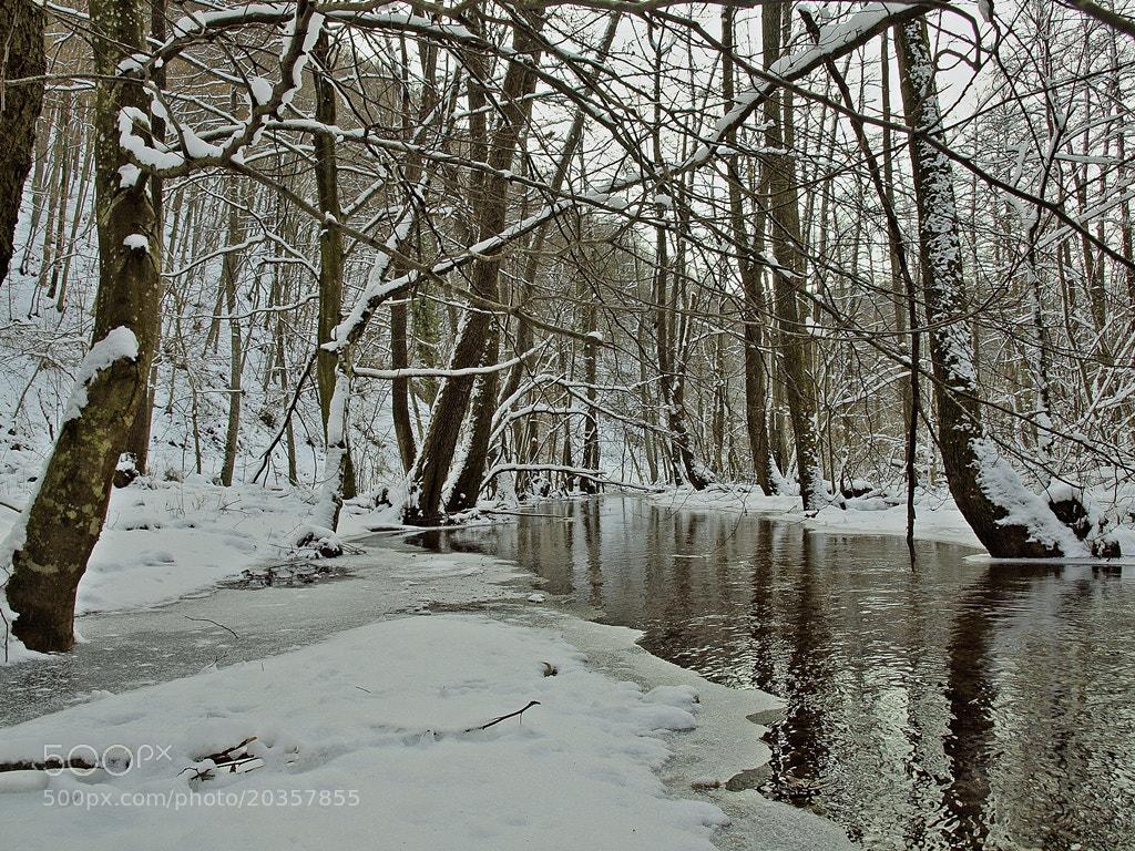 Photograph Frozen dream by Siniša Almaši on 500px