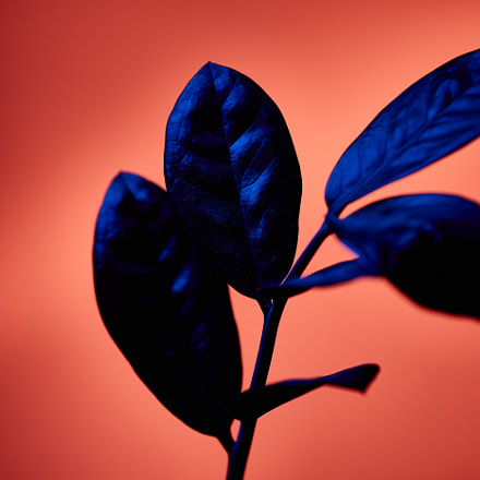 Redish and blueish, Canon EOS 5D MARK III