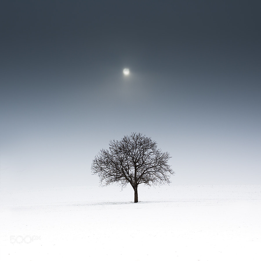 lonely tree in moonlight