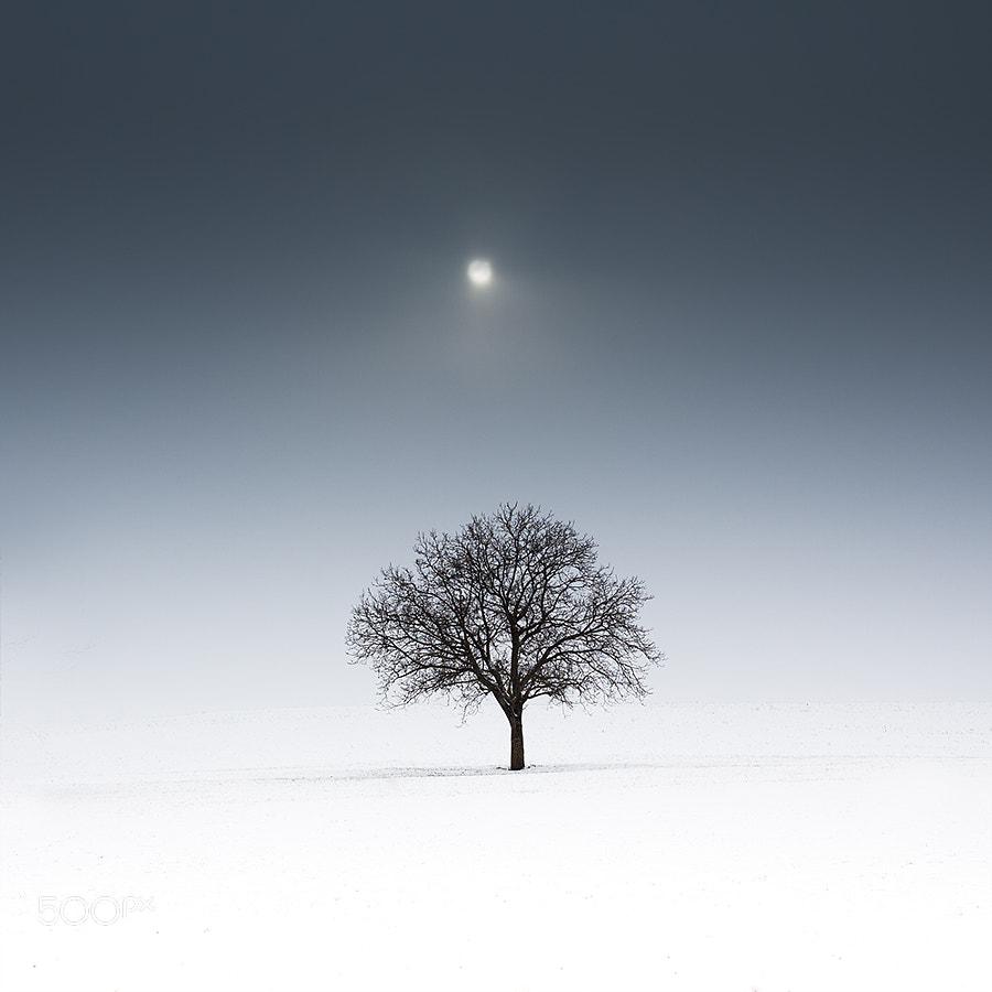 lonely tree in moonlight