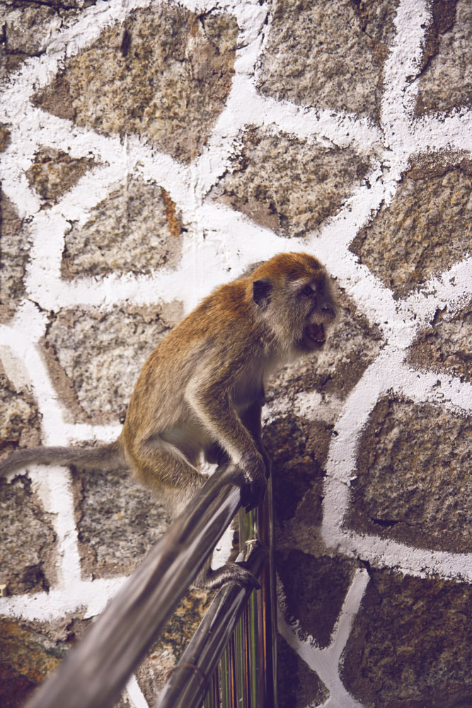 Photograph Monkey by Anthony Chiang on 500px