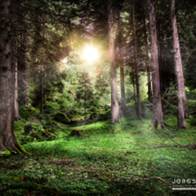 Wald | Forest