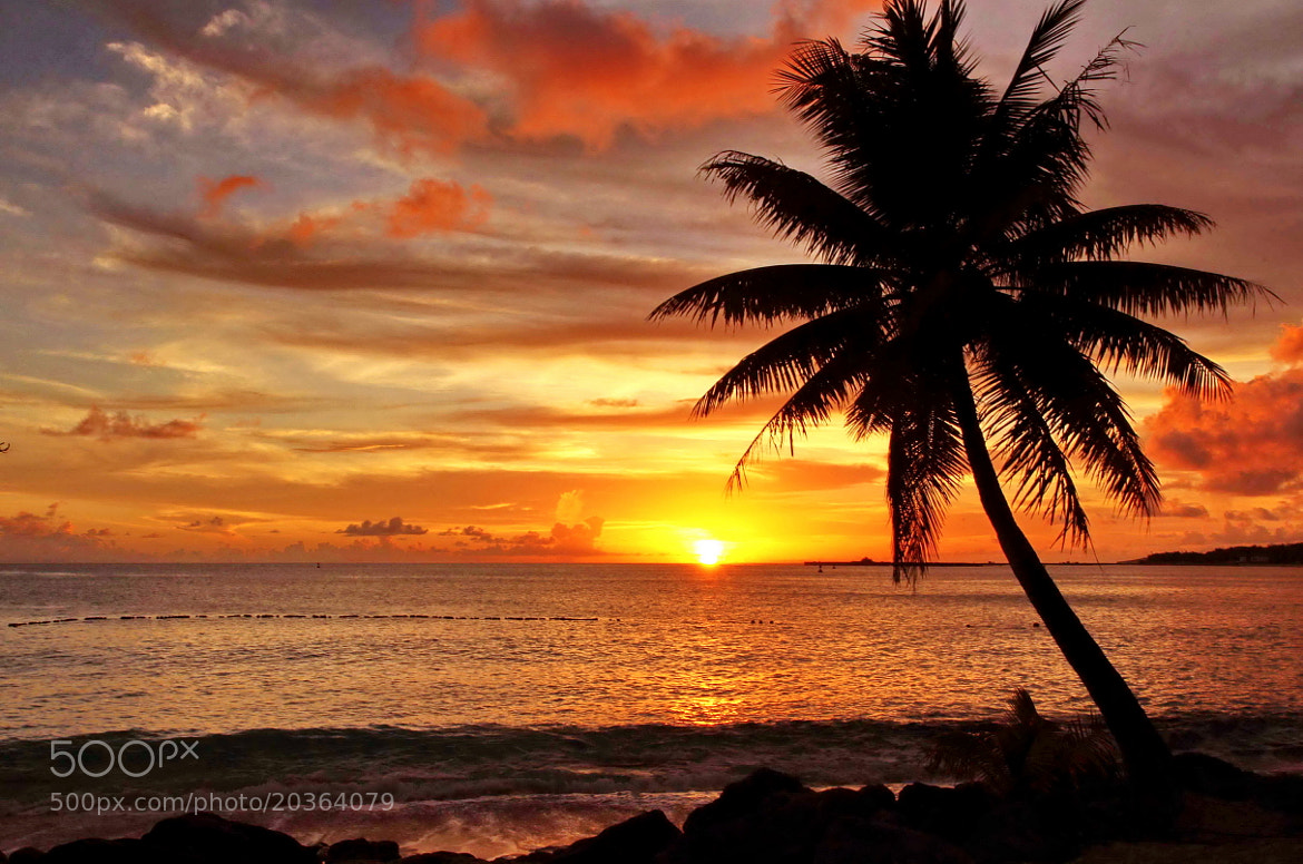 Photograph Sunset by sgmillionxu2000 on 500px