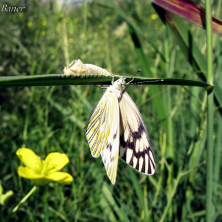 Metamorphosis completed., Canon POWERSHOT A650 IS
