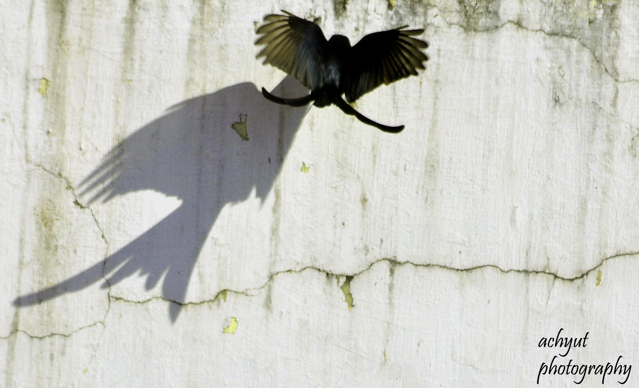 Photograph Shadow  by Achyut Patro on 500px