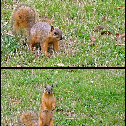 Squirrel Collage, Canon POWERSHOT S330