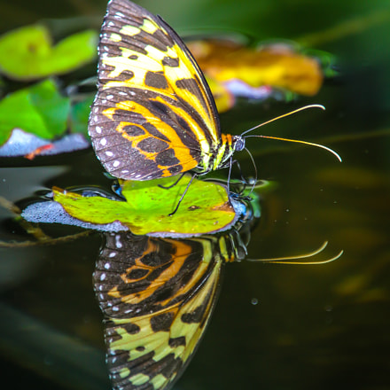 Butterfly reflection, Canon EOS 70D, TAMRON 16-300mm F/3.5-6.3 Di II VC PZD B016