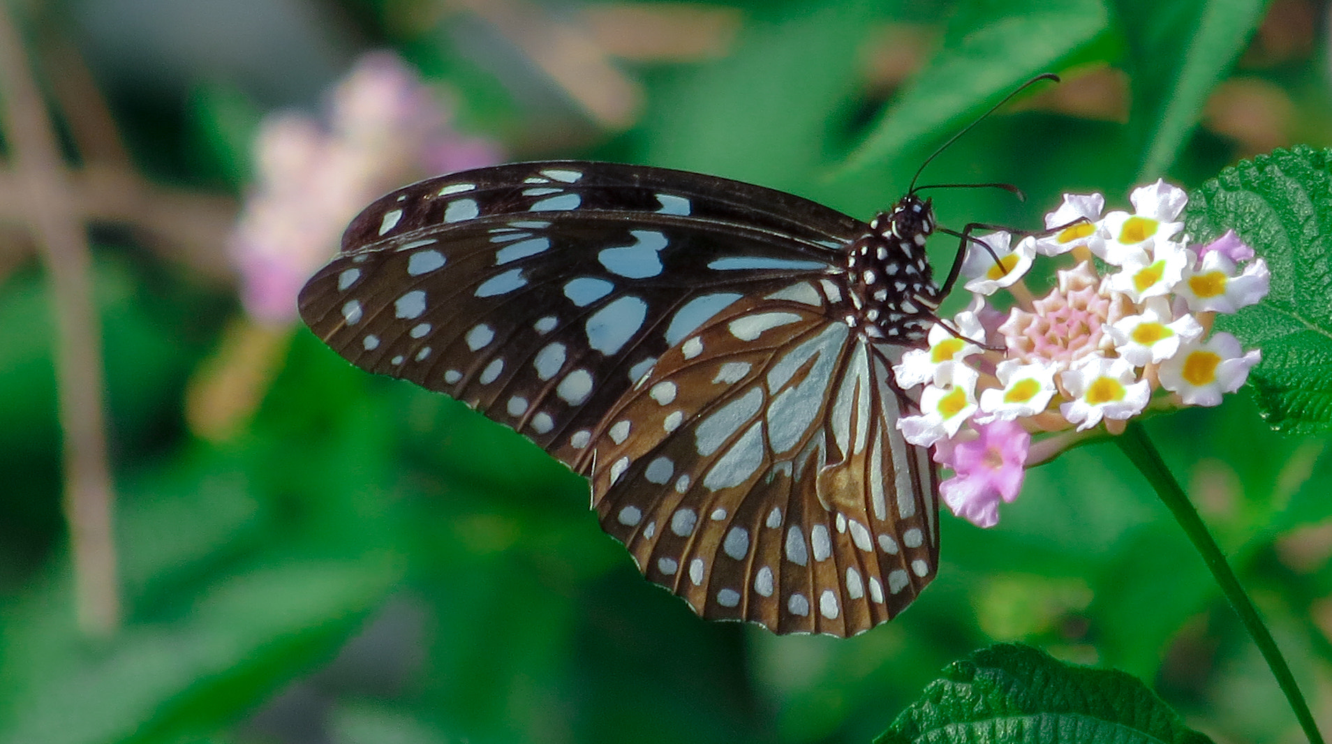 Photograph Butterfly by Prashant Gupta on 500px
