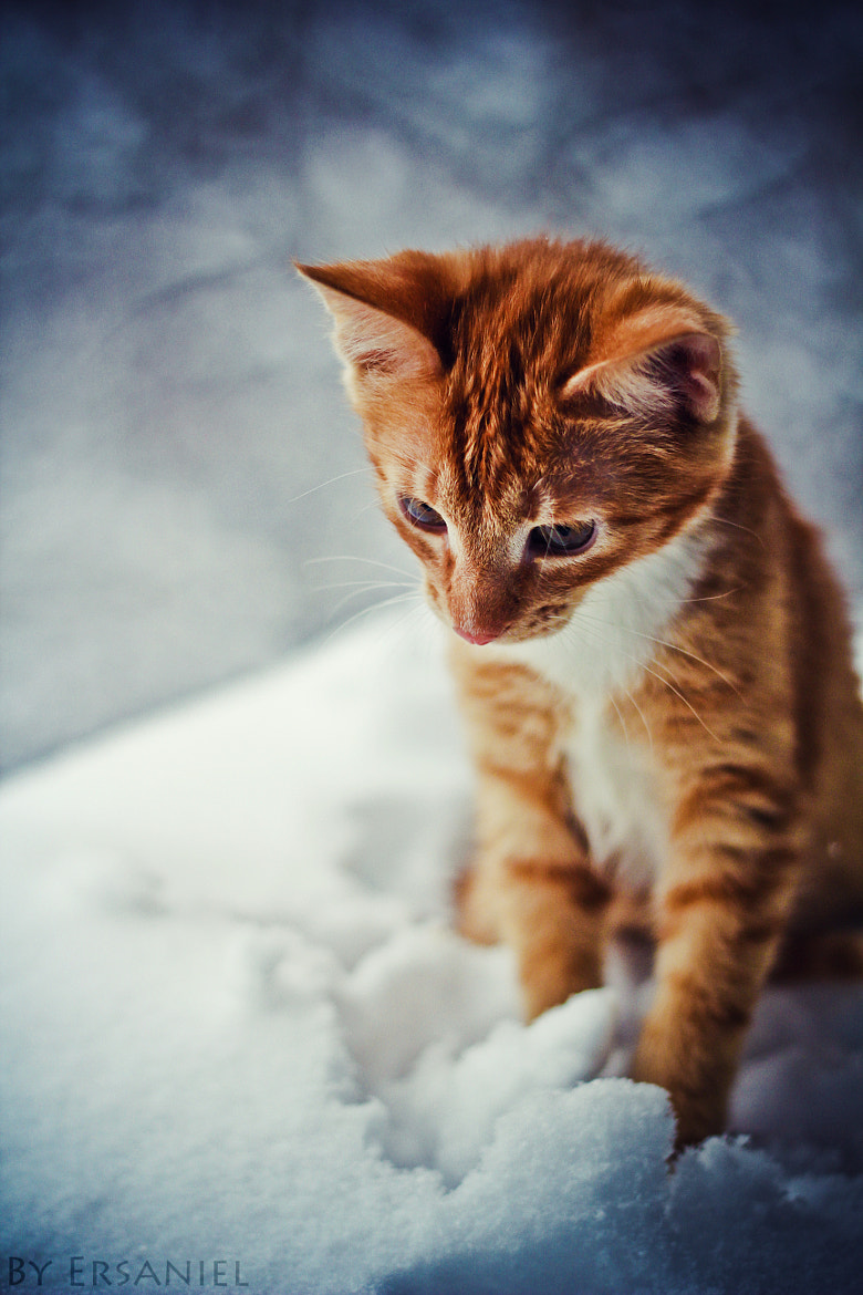 Photograph Axl by Elena Artamonova on 500px