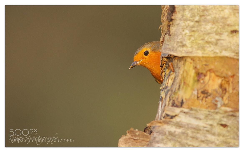 Photograph Peek a Boo….!! by Jason Wood on 500px