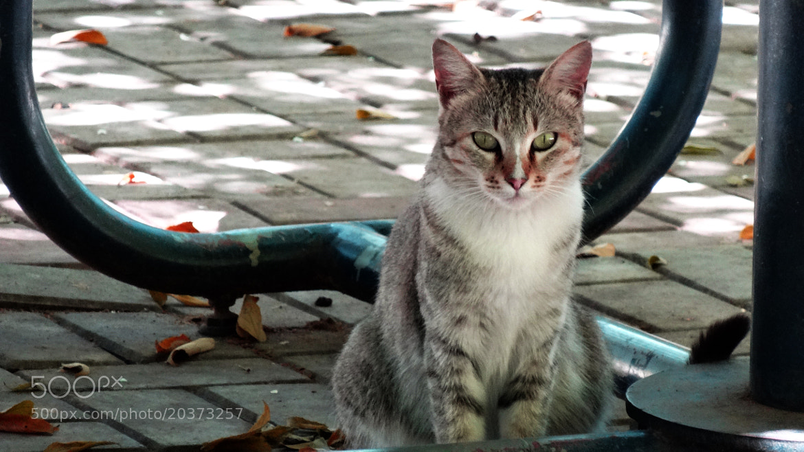 Photograph Kitty's Attitude by Ravi Shankar on 500px