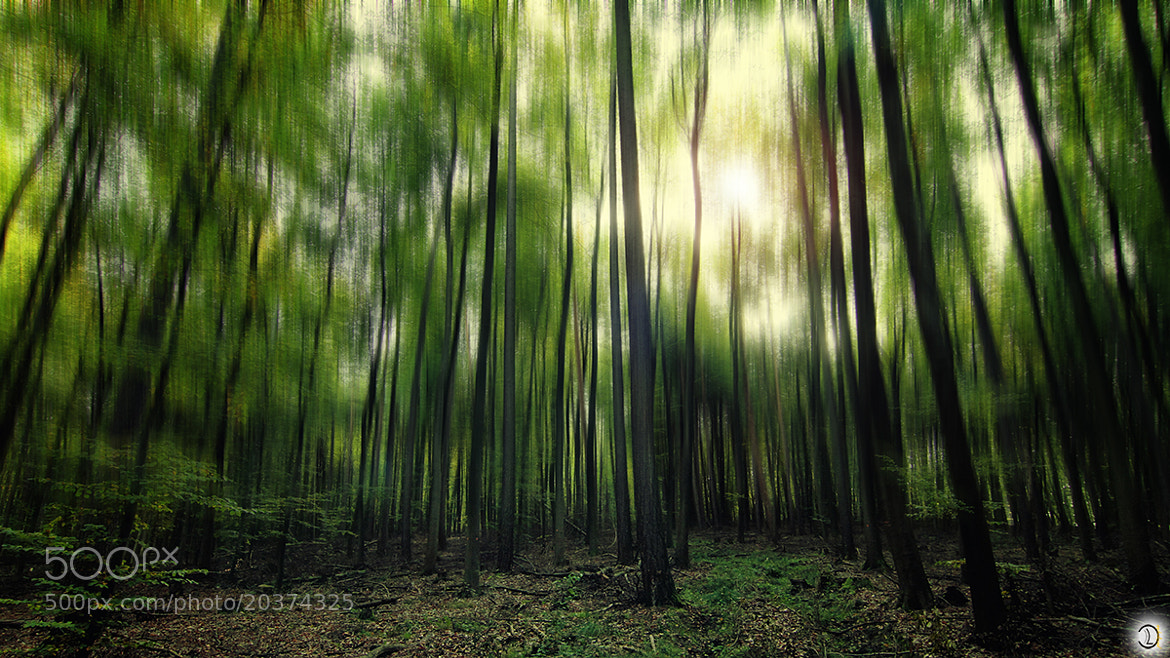 Photograph FOREST by Daniel Lang on 500px