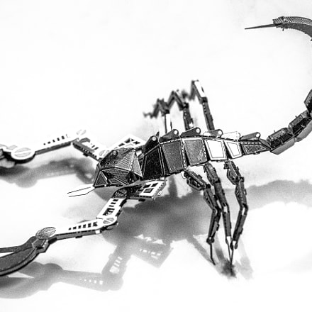 Scorpion, Sony SLT-A99V, Tamron SP AF 70-200mm F2.8 Di LD IF Macro