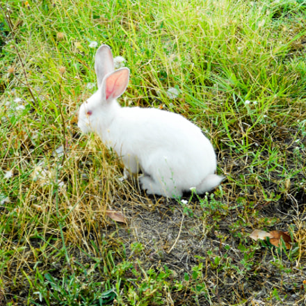 Follow the white rabbit, Nikon COOLPIX S3100